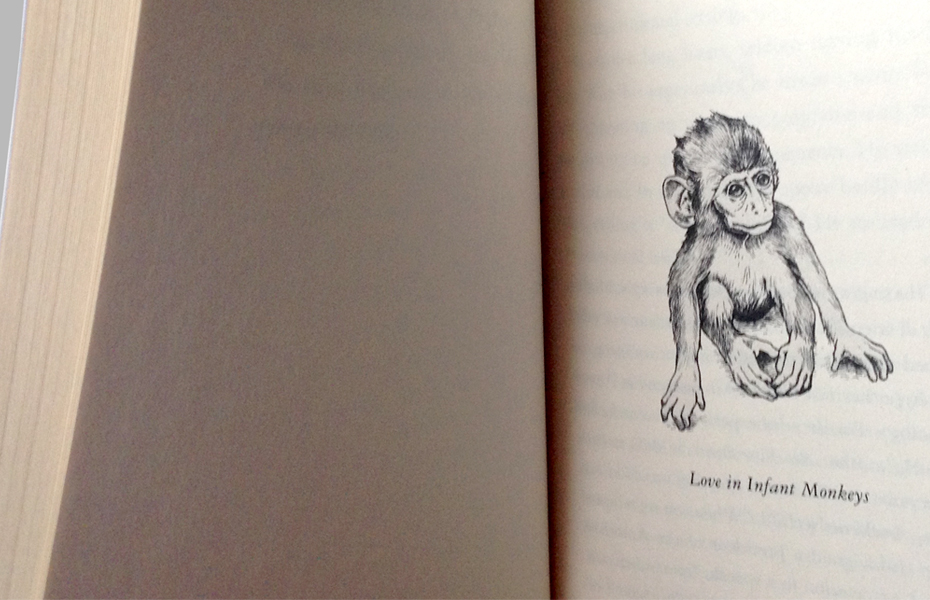 Love-Infant-Monkeys
