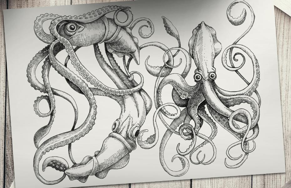MN9-octopi